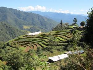 punakha+farm
