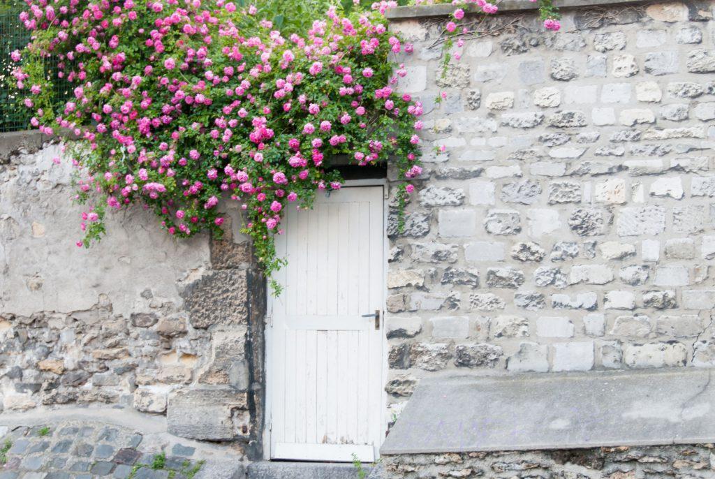 33448063 - trailing roses on garden door ii